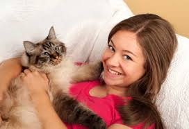 cats for top five calm cats for best cats for children petmd