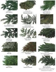 Types Of Christmas Trees Best 25 Ideas On Pinterest