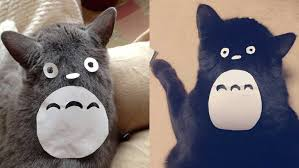 costume for cat this easy diy totoro costume will make your cat so so bad