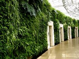 Fern Wall Longwood Conservatory   Architecture   Pinterest   Fern ... Shop Window At Next Home And Garden Store Ldon Road Camberley Handsome And Design 12 For Your Home Decor Stores With Eco Indoor House Sams Club Zoom Pan Loversiq Homebase Retail Group Improvements Diy Landscape Ideas Thehomestyle Co Inspirational Sloped Covington Georgia Newton County College Restaurant Menu Attorney Becker Pet Gardencandy Store Grdn For Urban Gardener New York By Design Brooklyn Sprout Decor Stores Beautiful Outdoor