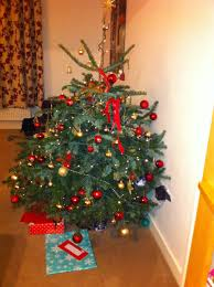 6ft Christmas Tree by Gallery Of Berkshire Christmas Trees In Caversham Reading