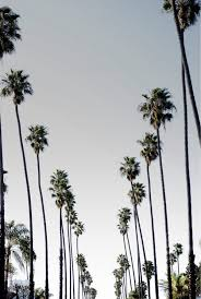 Palm Trees California And Palms Image