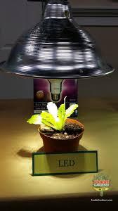 grow lights for beginners start plants indoors the foodie gardener