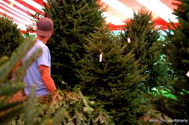 Christmas Trees At Kmart by Hart T Tree Farms Christmas Tree Lot Boca Raton Florida