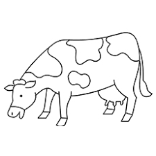 Coloring Pages Of Cow Eating