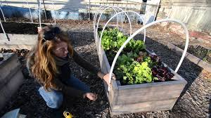 Backyard Winter Gardening 484 Best Gardening Ideas Images On Pinterest Garden Tips Best 25 Winter Greenhouse Ideas Vegetables Seed Saving Caleb Warnock 9781462113422 Amazoncom Books Small Patio Urban Backyard Slide Landscaping Designs Renaissance With Greenhouse Design Pafighting Fall Lawn Uamp Gardening The Year Round Harvest Trending Vegetable This Is What Buy Vegetables Fresh And Simple In Any Plants Home Ipirations