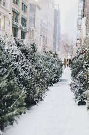 Vienna Twig Christmas Tree Sale by 35 Best Simple Christmas Images On Pinterest