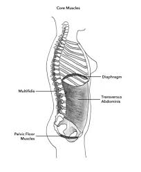 Hypertonic Pelvic Floor Muscles by Pelvic Floor Muscle Exercises Our Greatest Wealth Is Health