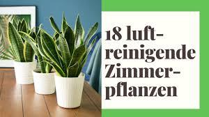 die 18 besten luftreinigenden zimmerpflanzen nasa