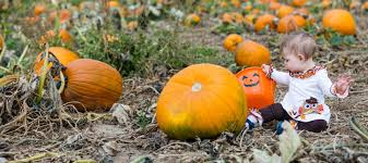 Seattle Pumpkin Patch by Best Pumpkin Patches Near Miami For Families Mommy Nearest