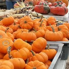 Halloween Farms In Illinois by Central Illinois Farm Beginnings The Land Connection