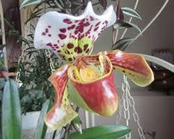 faire refleurir une orchidée gamm vert