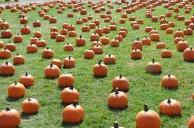 Columbus Pumpkin Patch by Largest Pumpkin Patch Long Island Has To Offer
