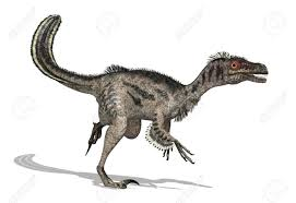 The Velociraptor Was A Feathered Dinosaur That Lived During Later Cretaceous Period