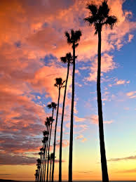 Fall California Palm Trees Sunset Encinitas Photographers On Tumblr