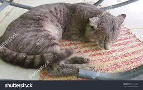 Cat Sleeping Under Rocking Chair Stock Photo (Edit Now ...