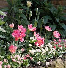 83 best bulb flowers images on bulb flowers bulb and
