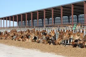 Southwest Dairy Day To Highlight Animal Care, Environmental ... Bryan Ipdent School District The Feed Barn Tx 77801 Ypcom Dtown Ding Guide 30 Delicious Options For Eats B048 Blog Sarah Boyd Realty 69acreshorse Cattle Ranch2 Homes3 Barnspond Near Jarrelltx 2926 Old Hickory Grove Franklin Robertson Equestrian Ranch Wremodeled Home Guest Quarters Great Views Raceway Home Facebook Southwest Dairy Day To Hlight Animal Care Vironmental Horse Farm For Sale In Pilot Point Tx Just Listed House Workshop House All On 6 Acres