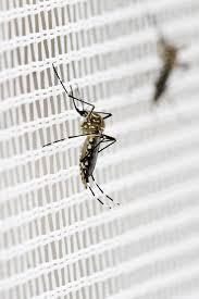 stechmücken bekämpfen oder vertreiben die besten