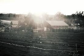 Pumpkin Patch Spokane Valley Wa by Big Barn Brewing Company
