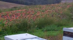 Gust Brothers Pumpkin Farm by A Visit To A Pumpkin Farm The Home Depot Youtube