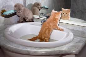 bathing cats best practices when bathing your cat