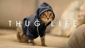 thug cat thug archives 3milliondogs