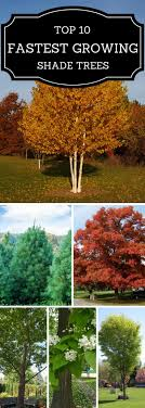 Best 25+ Backyard Trees Ideas On Pinterest   Backyard Privacy ... Best Shade Trees For Oregon Clanagnew Decoration Garden Design With How Do I Choose The Top 10 Faest Growing Gardens Landscaping And Yards Of For Any Backyard Small Trees Plants To Grow Grass In Howtos Diy Shop At Lowescom The Home Depot Of Ideas On Pinterest Fast 12 Great Patio Hgtv Solutions Sails Perth Lawrahetcom A Good Option Providing You Can Plant Eucalyptus Tree