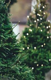 Amazing ForeverTree Christmas Trees