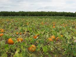 Pumpkin Picking Nj by Patch Go To Guide For Apple And Pumpkin Picking West Orange Nj