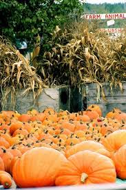 Pumpkin Patch Glastonbury Ct by 121 Best Pumpkin Festivals Images On Pinterest Fall Scenery And