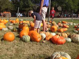 Pumpkin Patches Near Dallas Tx 2015 by Preston Trail Farms Formerly Big Orange Pumpkin Farm Plano