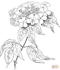 Rose Coloring Pages Roses Free For Kids