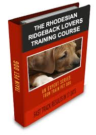 Do Rhodesian Ridgebacks Drool by Dogs U003e U003e Rhodesian Ridgeback Free Training Course On Rhodesian