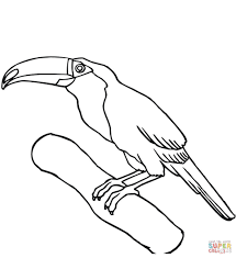 Toucan Coloring Pages Free In Page Babyboomme