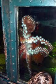 The octopus Picture of Oregon Undersea Gardens Newport