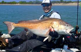 Potential World Record: 53-Pound Red Drum Caught From Kayak On Fly Fishing Vests Times Burning Storefront Free Shipping Fly Fish Decal Respect The Hats And Neck Gaiters Dead Drift Chucking Line Chasing Tail Red Truck Rod Review Steelhead Spey Switch Rods Explore Simple Company Youtube Potential World Record 53pound Drum Caught From Kayak On Sage X Switch Spey Wasatch Custom 926 Photos 13 Reviews Outdoor Simms Small Fit Trout Trucker Cap Ugly Bug Shop Fiberglass Manifesto February 2017