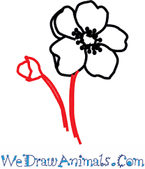 How To Draw A Poppy Flower