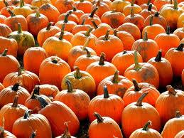 Pumpkin Patch Rv Park Hammond La by 25 Best Ozark County Images On Pinterest Children Grains And
