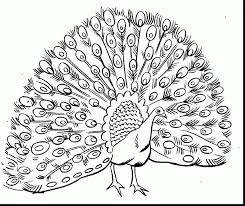Surprising Peacock Coloring Pages To Print With Adult And