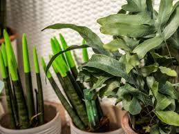 raumklima mit zimmerpflanzen verbessern ndr de ratgeber