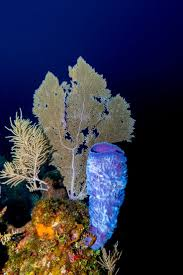 Decorator Crab Tank Mates by 10 Best Phylum Porifera Images On Pinterest The O U0027jays Branches