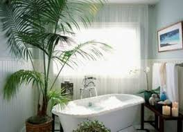 Fake Plants For The Bathroom by Bathroom Plants India Nz Best Australia No Window Good Ideas