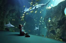 aquarium geant a visiter belgique à l aquarium de la rochelle l étonnante palette du monde marin