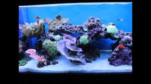 The Art Of Aquascaping - YouTube Home Design Aquascaping Aquarium Designs Aquascape Simple And Effective Guide On Reef Aquascaping News Reef Builders Pin By Dwells Saltwater Tank Pinterest Aquariums Quick Update New Aquascape Of The 120 Youtube Large Custom Living Coral Nyc Live Rock Set Up Idea Fish For How To A Aquarium New 30g Cube General Discussion Nanoreefcom Rockscape Drill Cement Your Gmacreef Minimalist 2reef Forum