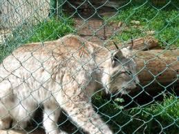 zoo fauverie du mont faron toulon photographies hdr kizone net