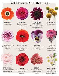 Learn the Meanings of Fall Flowers