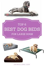 Top Rated Orthopedic Dog Beds by Best 25 Best Dog Beds Ideas On Pinterest Diy Dog Cheap Puppies