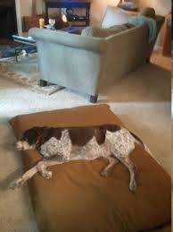 Mammoth Dog Beds by Cleaning Mammoth Dog Beds Usa