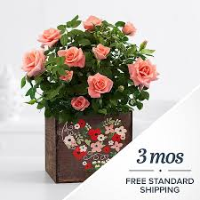 monthly plant send plant gifts each month proflowers